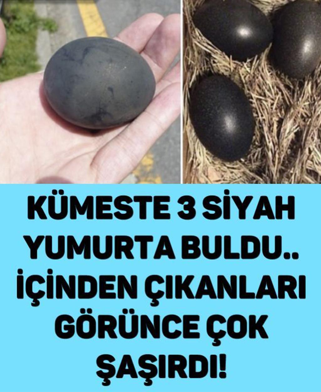 Kümeste 3 Siyah Yumurta Buldu Ve İçinden Çıkanlara Şaşırıp Kaldı